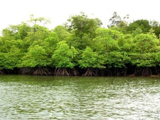 Peraturan Perundangan Lingkungan Hidup dan Cara Pemenuhannya